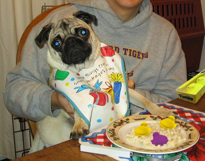 Resultado de imagen para pug dog, eating at the table